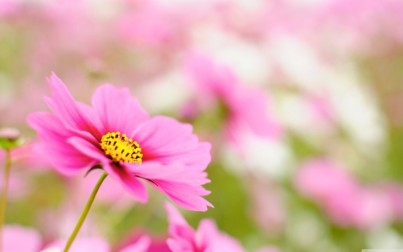 image-fleur-conseil-conjugal-732x458